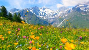 Alpjobs - The Austrian Alps are blooming again